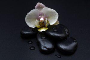 Blomst og Hot stone massage sten